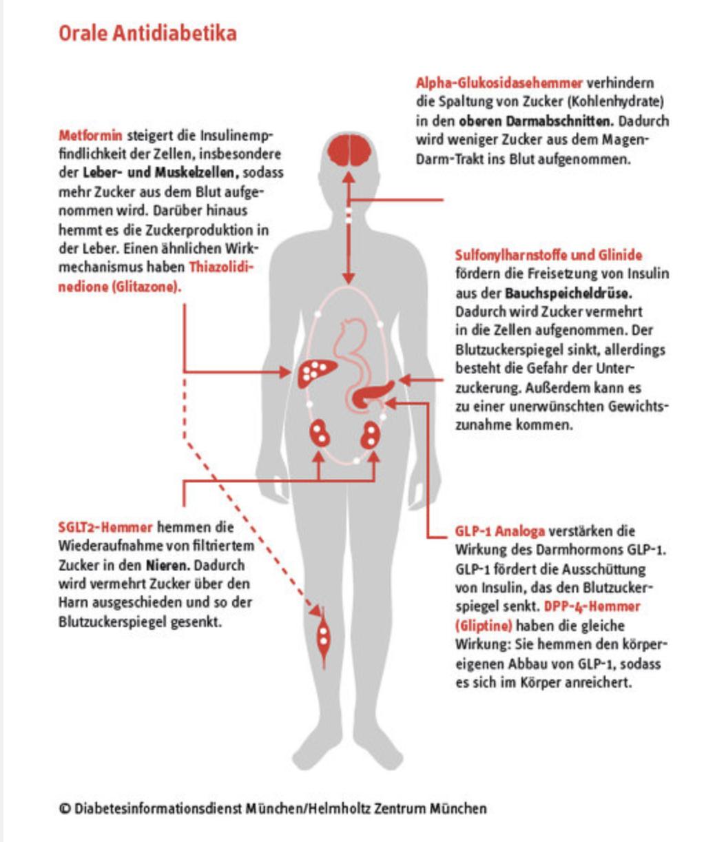 Tolle Anatomie Der Penisarterien Fotos - Menschliche Anatomie Bilder ...