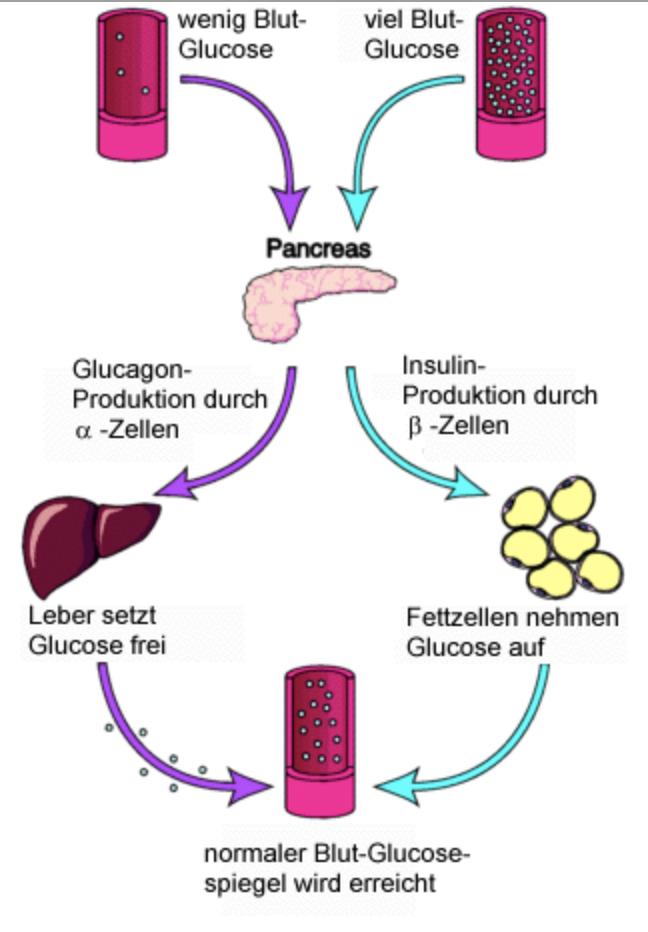 gestörte glukosetoleranz behandlung